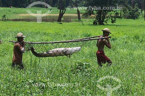 Pescadores carregando Pirarucu (Arapaima gigas) - Reserva de Desenvolvimento Sustentável Piagaçu-Purus  - Beruri - Amazonas (AM) - Brasil