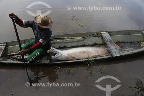 Pescador transportando Pirarucu em canoa durante a Pesca do Pirarucu (Arapaima gigas) - Reserva de Desenvolvimento Sustentável Piagaçu-Purus  - Beruri - Amazonas (AM) - Brasil