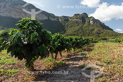 Plantação de Café com formação rochosa ao fundo  - Ibicoara - Bahia (BA) - Brasil