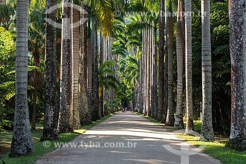 Vista da Alameda das Palmeira no Jardim Botânico do Rio de Janeiro  - Rio de Janeiro - Rio de Janeiro (RJ) - Brasil