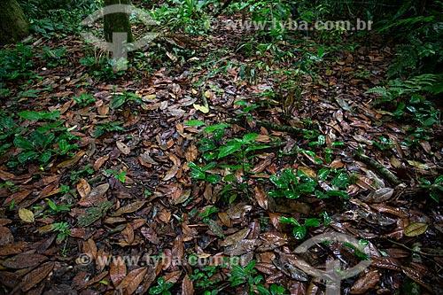 Folhas secas em decomposição sobre o solo em área de Mata Atlântica  - São Sebastião - São Paulo (SP) - Brasil