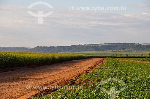 Paisagem com plantação de cana, soja e cuesta da Serra de Itaqueri ao fundo  - Santa Maria da Serra - São Paulo (SP) - Brasil