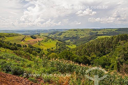 Plantação de milho em pequena propriedade na Serra da Fartura  - Iporã do Oeste - Santa Catarina (SC) - Brasil