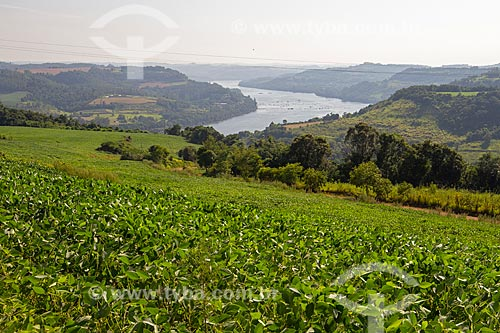 Plantação de Soja em encosta de morro com Rio Uruguai ao fundo  - Barra do Guarita - Rio Grande do Sul (RS) - Brasil