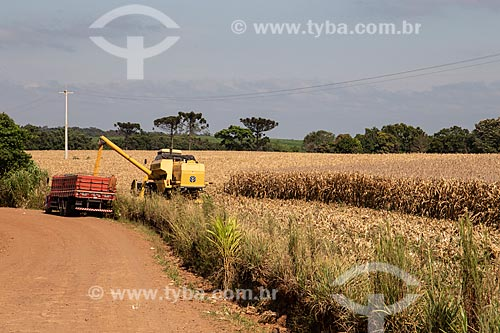 Colheita de milho  - Derrubadas - Rio Grande do Sul (RS) - Brasil