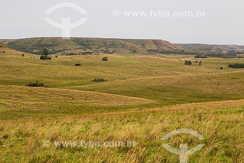 Paisagem de coxilhas dos campos sulinos  - Rosário do Sul - Rio Grande do Sul (RS) - Brasil