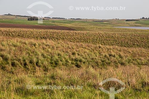 Paisagem de campos nativos dos campos sulinos  - Rosário do Sul - Rio Grande do Sul (RS) - Brasil