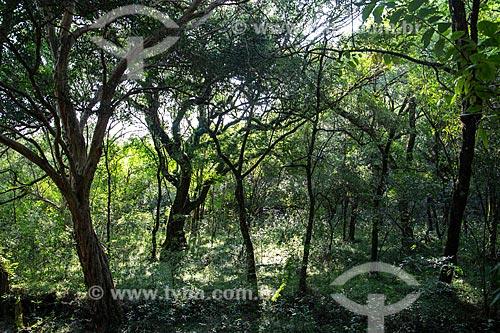 Interior de mata na base de cerro nas bordas da Área de Proteção Ambiental do Ibirapuitã  - Santana do Livramento - Rio Grande do Sul (RS) - Brasil