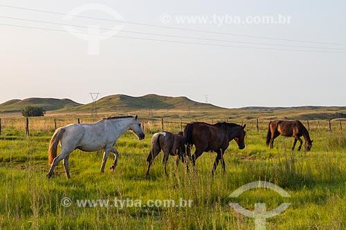 Grupo de cavalos crioulos em pastagem natural nos campos sulinos  - Santana do Livramento - Rio Grande do Sul (RS) - Brasil