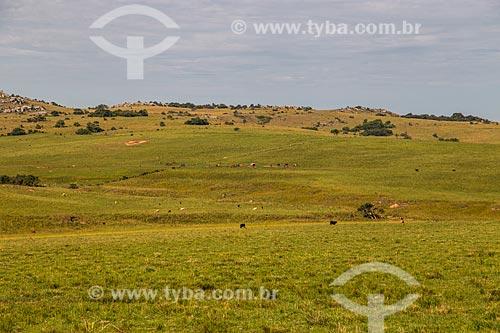Paisagem de campos nativos dos campos sulinos  - Quaraí - Rio Grande do Sul (RS) - Brasil