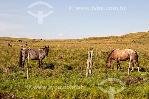 Grupo de cavalos crioulos em pastagem na Serra do Caverá - Área de Proteção Ambiental do Ibirapuitã  - Alegrete - Rio Grande do Sul (RS) - Brasil