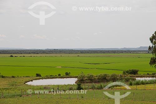 Plantação de arroz nos campos sulinos  - Manoel Viana - Rio Grande do Sul (RS) - Brasil
