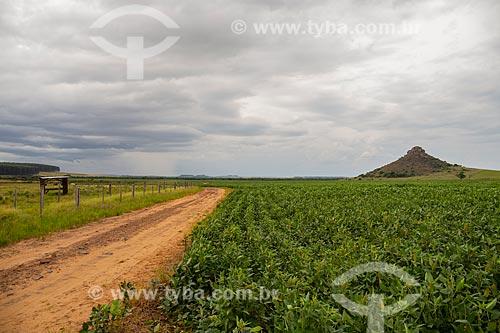 Estrada de terra e plantação de soja  - Alegrete - Rio Grande do Sul (RS) - Brasil