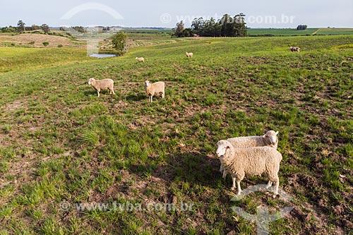 Foto feita com drone de rebanho ovino pastando nos campos sulinos  - Rosário do Sul - Rio Grande do Sul (RS) - Brasil