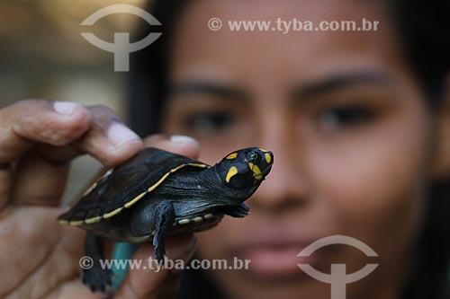 Tracajá ou Tartaruga da Amazônia (podocnemis unifilis) - Reserva de Desenvolvimento Sustentável Igapó-Açu  - Borba - Amazonas (AM) - Brasil