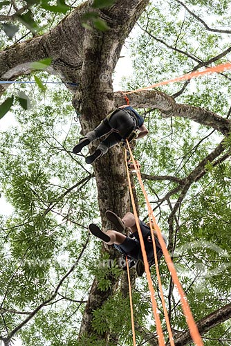 Turistas escalando Sumaúma (Ceiba pentandra) na Floresta amazônica  - Iranduba - Amazonas (AM) - Brasil