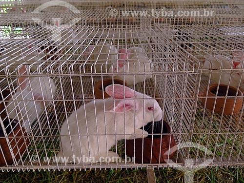 Criação de coelhos  - Cotiporã - Rio Grande do Sul (RS) - Brasil