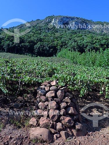 Moirão de antigo parreiral de uvas  - Cotiporã - Rio Grande do Sul (RS) - Brasil