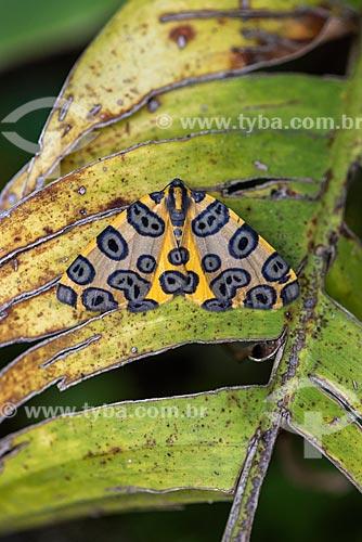 Detalhe de mariposa ou borboleta na Área de Proteção Ambiental da Serrinha do Alambari  - Resende - Rio de Janeiro (RJ) - Brasil