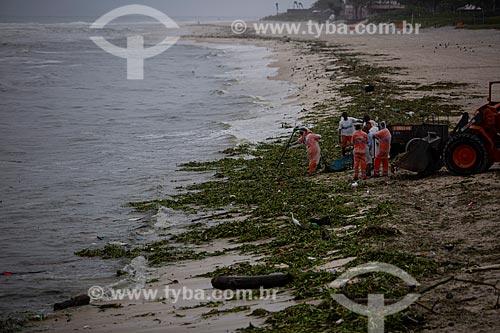Acumulo de Gigogas (Eichhornia crassipes) na praia da Barra da Tijuca devido à poluição nas lagoas da região  - Rio de Janeiro - Rio de Janeiro (RJ) - Brasil