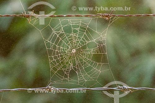 Detalhe de teia de aranha em zona rural  - Cachoeiras de Macacu - Rio de Janeiro (RJ) - Brasil