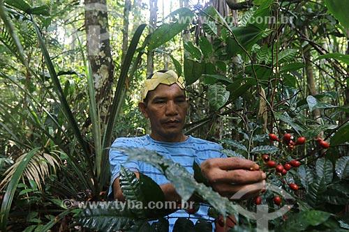 Índios da Tribo sateré-mawé - Comunidade Wakirú - Fazem tratamento para cura do Covid-19 com ervas medicinais  - Crise do Coronavírus  - Manaus - Amazonas (AM) - Brasil