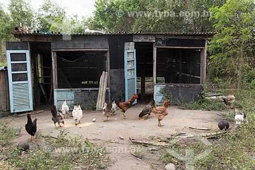 Criação de galinhas - Terra Indígena Pau Brasil da etnia Tupiniquim - ACRÉSCIMO DE 100% SOBRE O VALOR DE TABELA  - Aracruz - Espírito Santo (ES) - Brasil