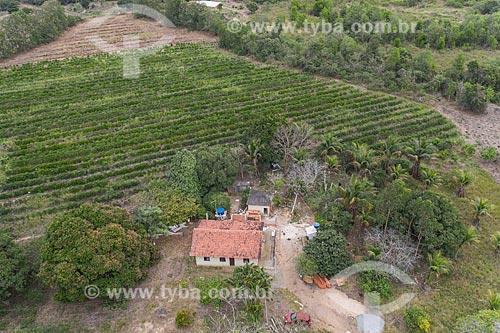 Foto feita com drone de casa com roça de café ao fundo - Terra Indígena Pau Brasil da etnia Tupiniquim - ACRÉSCIMO DE 100% SOBRE O VALOR DE TABELA  - Aracruz - Espírito Santo (ES) - Brasil