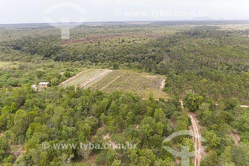 Foto feita com drone de área reflorestada e área com mata original - Terra Indígena Pau Brasil da etnia Tupiniquim - ACRÉSCIMO DE 100% SOBRE O VALOR DE TABELA  - Aracruz - Espírito Santo (ES) - Brasil