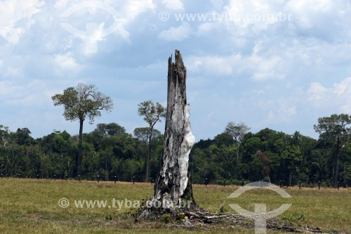 Área desmatada em Nova Olinda do Norte - Nova Olinda do Norte - Amazonas (AM) - Brasil