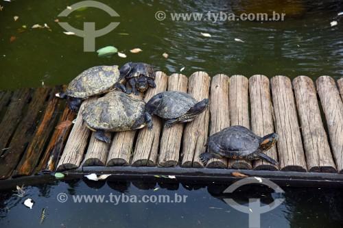 Tartaruga Tigre-Dágua (Trachemys dorbigni) - também conhecida como Tartaruga-Tigre ou Tartaruga-Verde-e-Amarela - no Jardim Botânico do Rio de Janeiro - Rio de Janeiro - Rio de Janeiro (RJ) - Brasil
