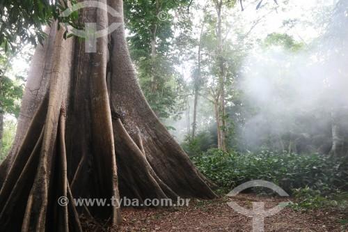 Sumaúma (Ceiba pentandra) em Igapó - Iranduba - Amazonas (AM) - Brasil