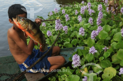 Criança ribeirinha segurando peixe tucunaré no Rio Ariaú - Iranduba - Amazonas (AM) - Brasil