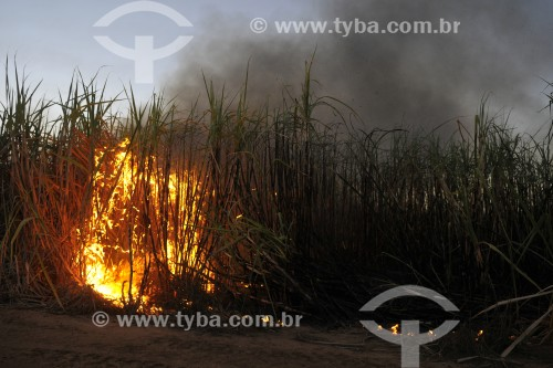 Incêndio de grandes proporções em plantação de cana-de-açúcar - Irapuã - São Paulo (SP) - Brasil