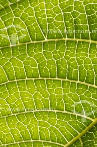 Detalhe de folha de planta - Área de Proteção Ambiental da Serrinha do Alambari - Resende - Rio de Janeiro (RJ) - Brasil