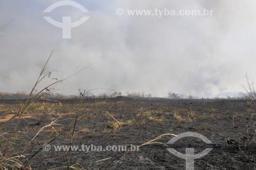 Incêndio em mata nativa - Antiga área do IPA (Instituto Penal Agrícola) - São José do Rio Preto - São Paulo (SP) - Brasil