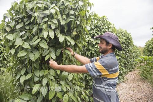 Pequeno produtor de pimenta no Assentamento Sezínio Fernandes de Jesus - Linhares - Espírito Santo (ES) - Brasil