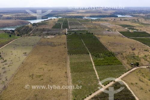 Foto feita com drone do Assentamento Sezínio Fernandes de Jesus com plantações de banana e café - Linhares - Espírito Santo (ES) - Brasil
