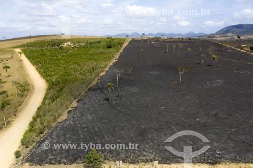 Foto feita com drone do Assentamento Sezínio Fernandes de Jesus com vegetação destruída por queimada - Linhares - Espírito Santo (ES) - Brasil