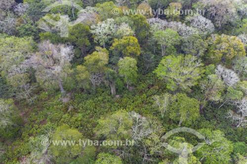 Foto feita com drone de Plantação de cacau no sistema cabruca - são áreas de cultivo onde o cacau foi implantado sob a sombra da floresta nativa raleada - Linhares - Espírito Santo (ES) - Brasil