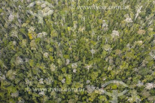 Foto feita com drone da Reserva Biológica Sooretama - maior área contínua de mata atlântica do estado - Sooretama - Espírito Santo (ES) - Brasil