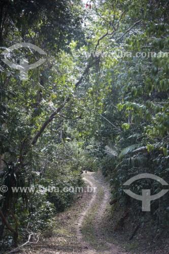Reserva Biológica Sooretama - maior área contínua de mata atlântica do estado - Sooretama - Espírito Santo (ES) - Brasil