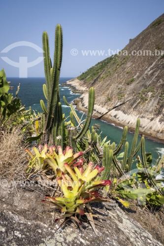 Cactos e bromélias em encosta no Parque Estadual da Serra da Tiririca - Niterói - Rio de Janeiro (RJ) - Brasil