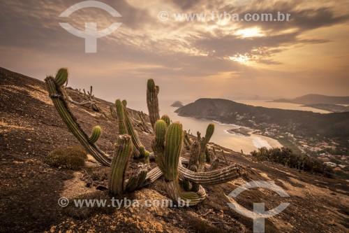 Cactos em encosta no Parque Estadual da Serra da Tiririca - Niterói - Rio de Janeiro (RJ) - Brasil