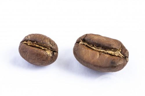 Foto comparativa do grão de café Moca 100% arábica com grão normal - Rio de Janeiro - Rio de Janeiro (RJ) - Brasil
