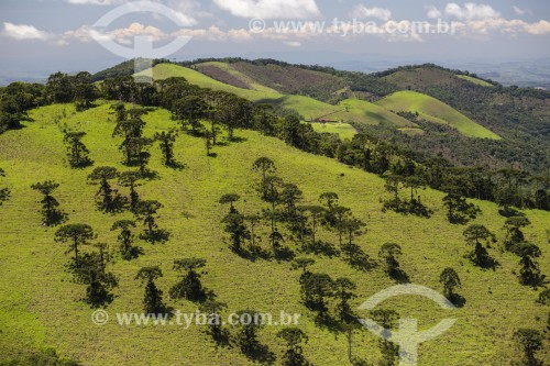 Paisagem da Serra da Mantiqueira coberta com pasto e araucárias - São José dos Campos - São Paulo (SP) - Brasil