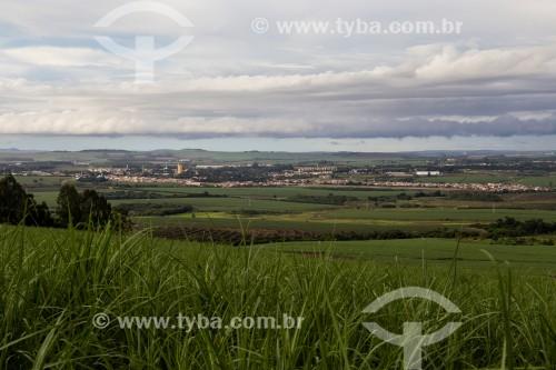 Plantação de cana de açúcar e eucalipto na zona rural de Cordeirópolis - Cordeirópolis - São Paulo (SP) - Brasil