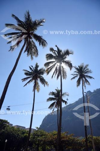 Palmeiras e bondinho fazendo a travessia entre o Morro da Urca e o Pão de Açúcar - Rio de Janeiro - Rio de Janeiro (RJ) - Brasil