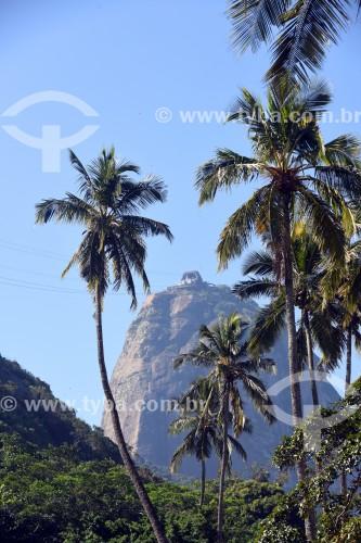 Palmeiras e Pão de Açúcar ao fundo - Rio de Janeiro - Rio de Janeiro (RJ) - Brasil