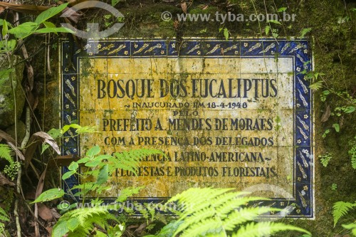 Detalhe de ruína de antiga fazenda no Parque Nacional da Tijuca  - Rio de Janeiro - Rio de Janeiro (RJ) - Brasil